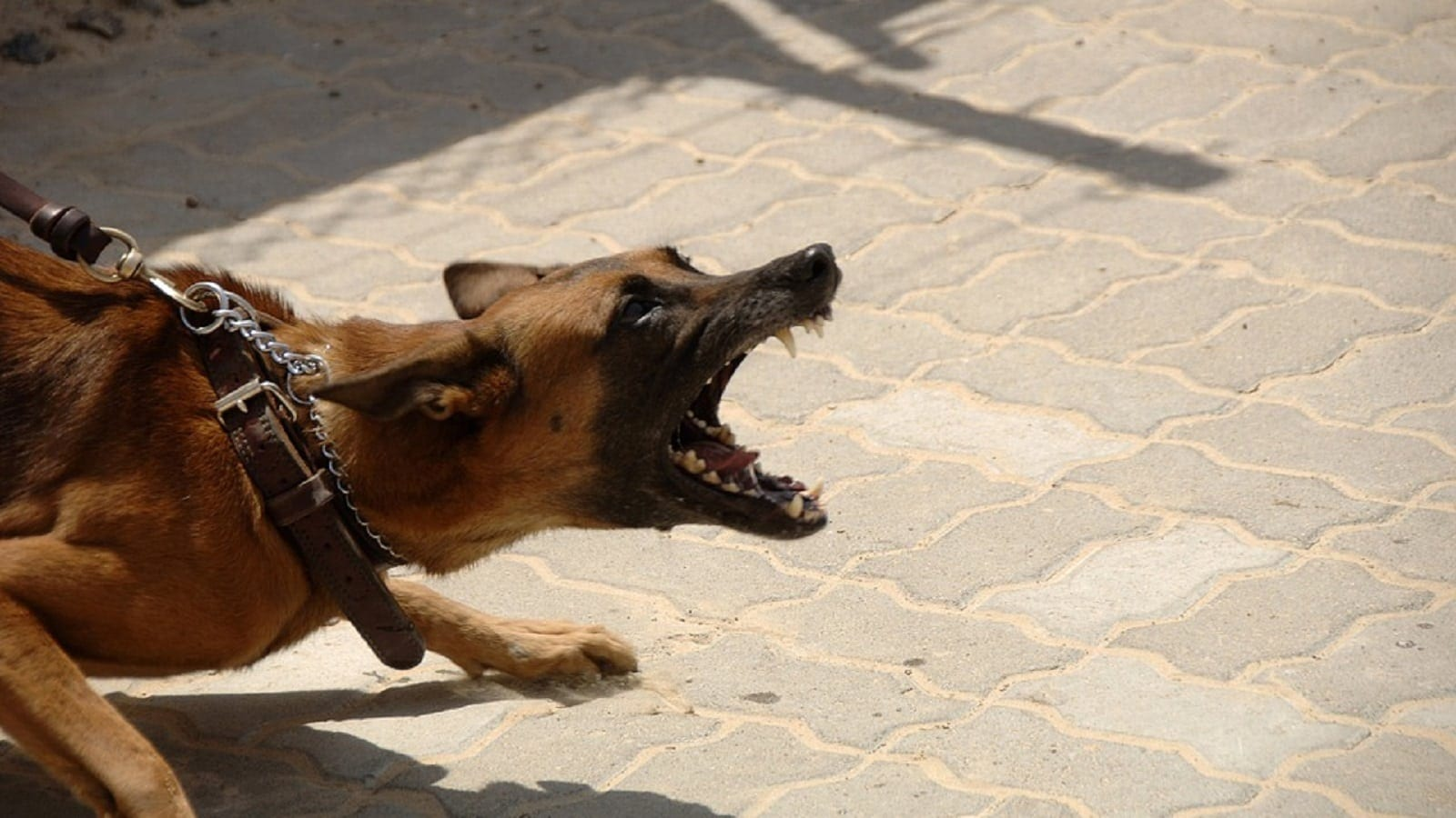 Aggressive Dog Stock Photo